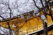Way too beautiful to see snow-capped Golden Pavilion