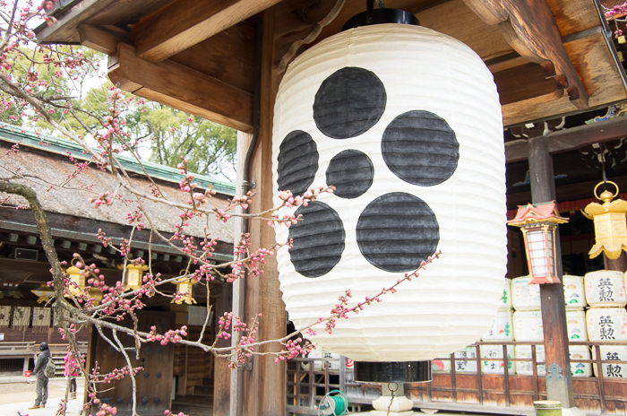 A paper lantern by a plum tree