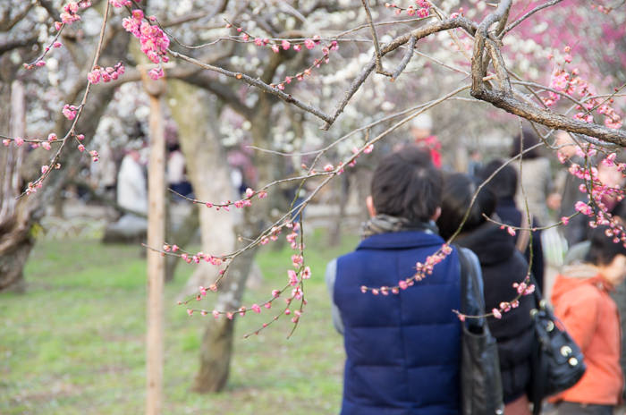 Watching plum blossoms