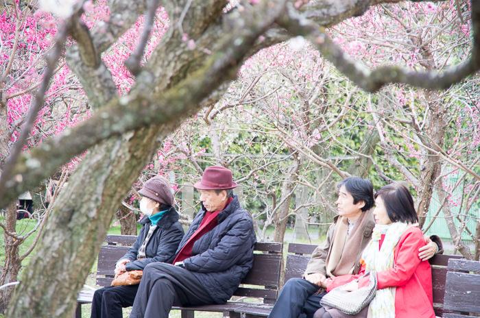 Watching plum trees