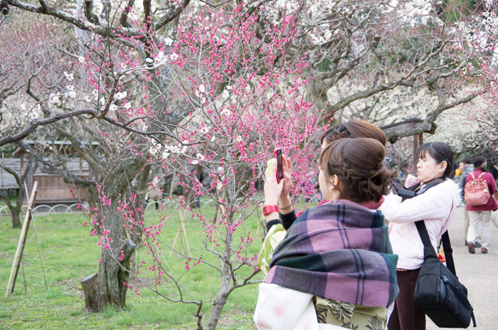 Kimono and plum blossoms