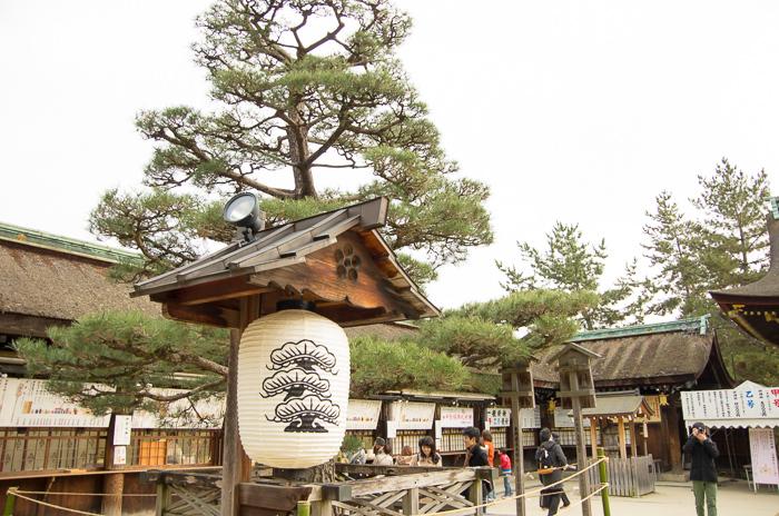 A paper lantern by a pine tree